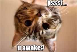 cat wake u up